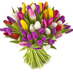 bouquet tulips on white background