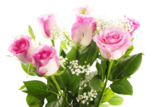 photodune 1292928 pink roses xs