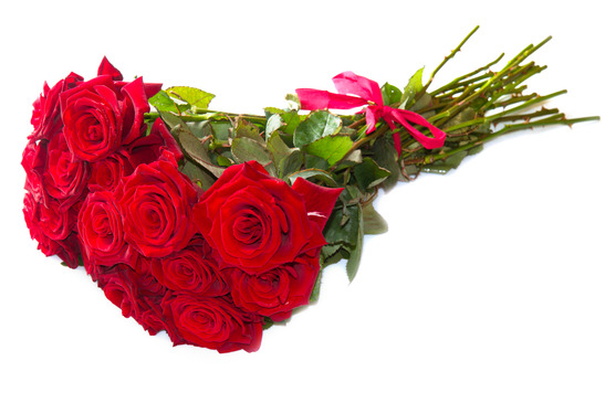 photodune 3631424 red roses xs