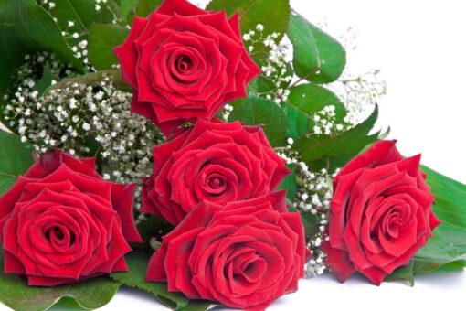 photodune 672403 bouquet of roses xs