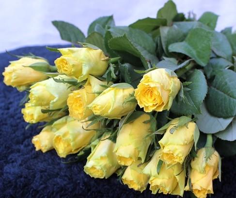 15 yellowroses