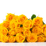 bouquet of yellow roses isolated