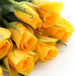 7 yellowroses